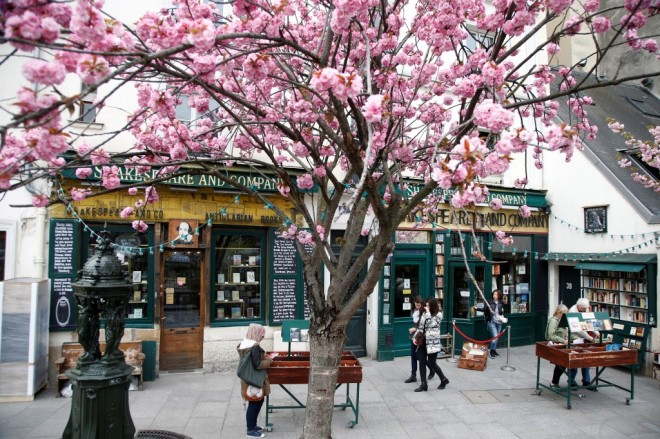 A Paulownia Tree Blossoms in Front of Shakespeare and Company